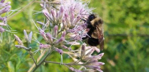 Buscan proteger a los polinizadores y a los invertebrados -...