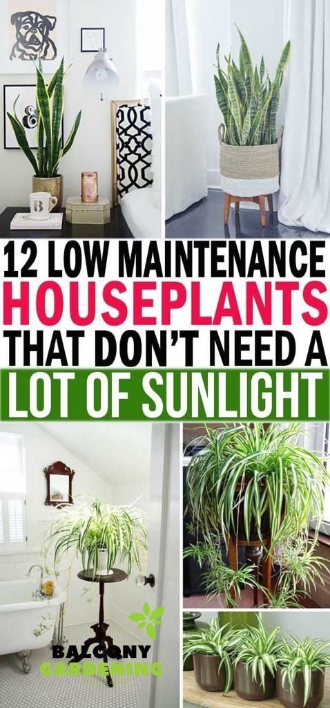 Top 12 Low Maintenance Indoor House Plants 1000 House Indoor Lowmaintenance Plants Top In 2020 Plants Low Light House Plants House Plants Indoor