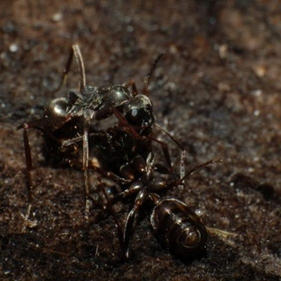 how to kill water ants