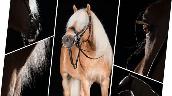 Portfolio professionelle Pferdefotografie - Pferde im Studio - Hunde im Studio   Pferdefotografie München   Rahlmeier
