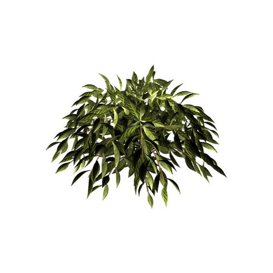 L'île de Kahlan: TUBE:CHAMPIGNON ❤ liked on Polyvore featuring home, home decor, floral decor, flowers, plants, foliage, green, fillers, flower home decor y flower stem