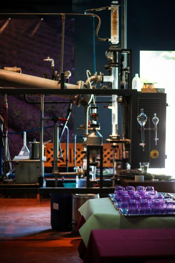 A Kosher Adventure In a Lavender Distillery