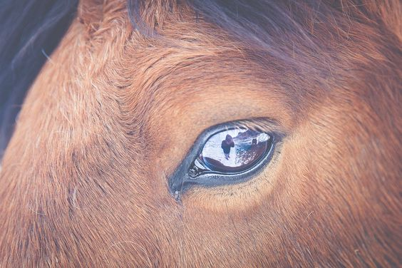 Icelandic Horse. My reflection in his eyes. You should visit Iceland. Photo by Hinrich Carstensen
