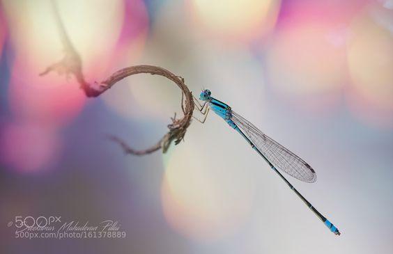 Blue dragon by drsreekumarm2000. @go4fotos