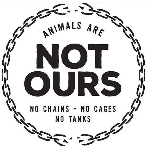 Animals are not commodities, not ours to cage, confine, repress and exploit, not ours to use to objects to clothe feed us and 'entertain' us. #NotOurs #EndExploitation #GoVegan EM-C: