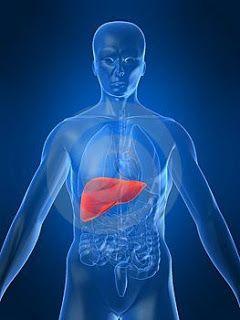 Alimentos aliados da saúde do fígado - Aliados da Saúde