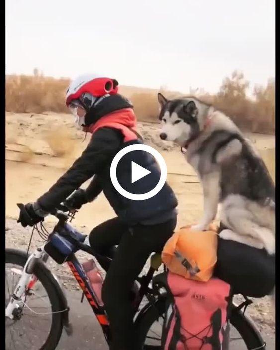 Cão viajando com sua mãe na bicicleta