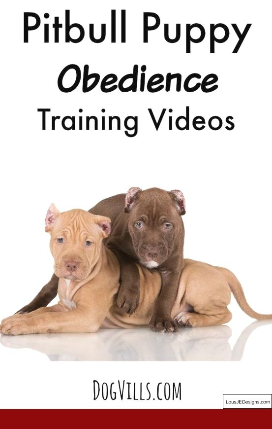 Dog Training Tips Wikipedia And Pics Of Train A Dog Not To Bark