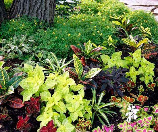 Design Lessons from a Minnesota Shade Garden Gardens Hosta
