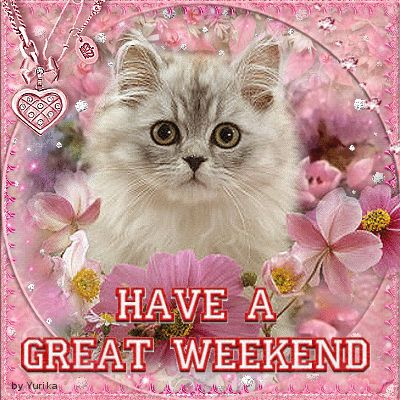 Have a great weekend ! #cat , #kitten  My Creations On Blingee  Pinterest ...