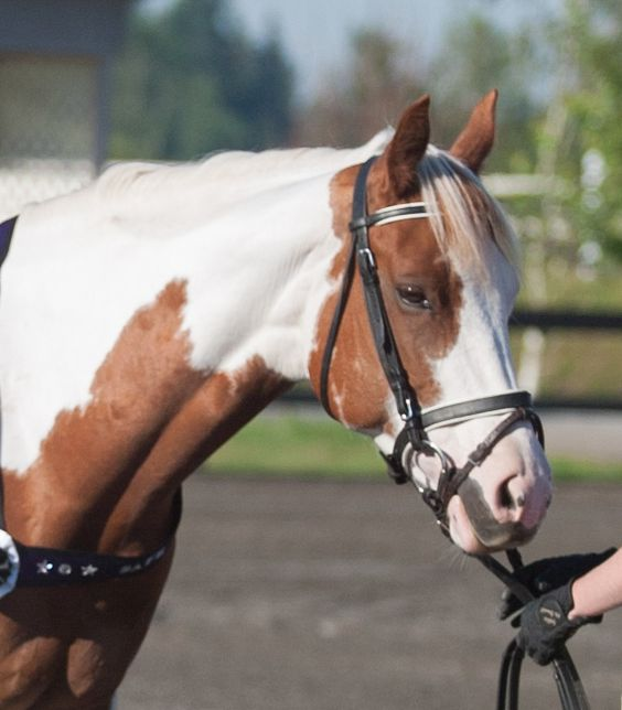 Rescue horse gets second chance and renewed hope for adoption thanks to SAFE and generous donation.