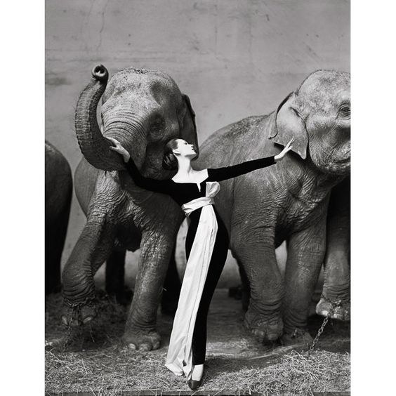 Dovima with Elephants by Richard Avedon, Evening dress by Dior, Cirque d'Hiver, Paris, August 1955