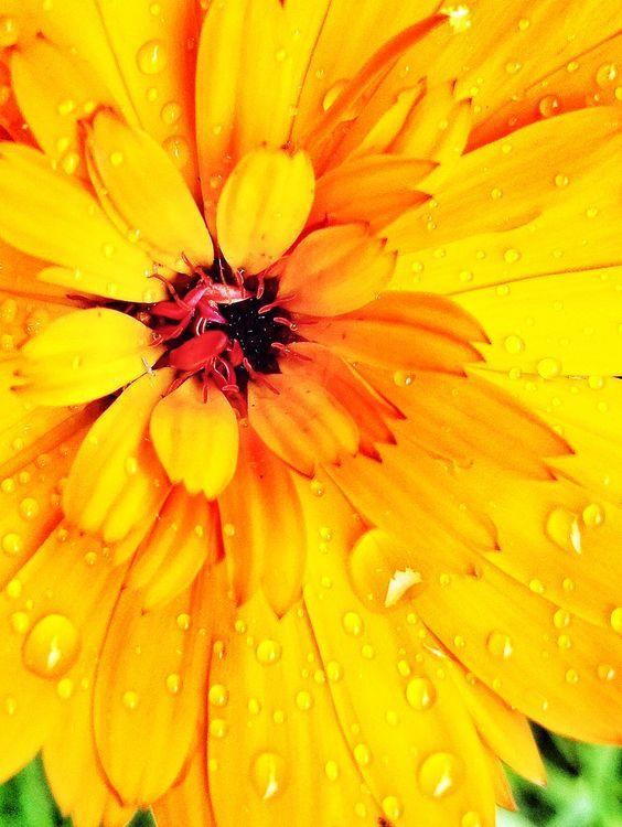 Snapseed Flowers