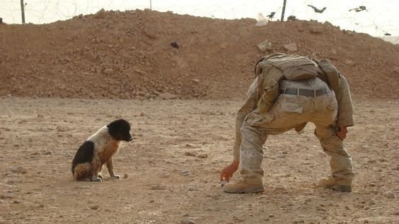 This is a very touching photo that was taken by a solider in Iraq. They found a puppy and fed it some food, making a friend as a result. It just goes to show that creatures can help each other out in difficult times.