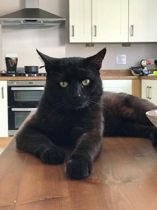 Do You Recognise Me I Am A Male Cat With No Microchip I Was Found Near Wilkinson Road In Kempston Luckily I Am Now In Care Wi Found Cat Cats Cat