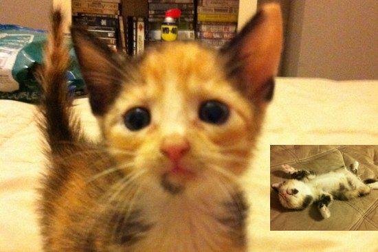Meet String The Calico Boy - Love Meow