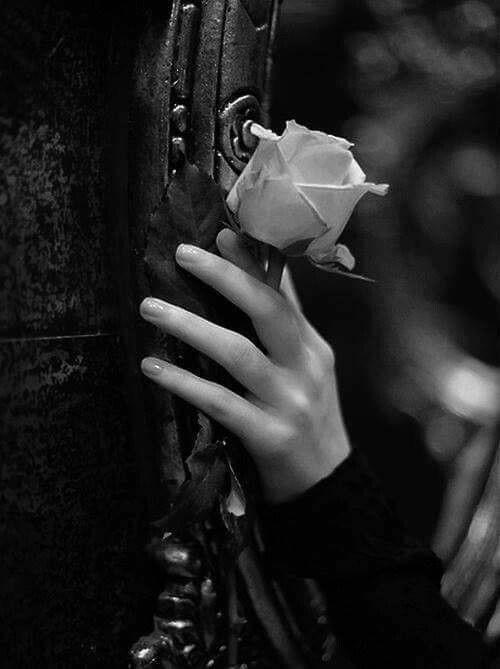 أراك في كل مكان كما لو كان هذا العالم مصنوعا من مرآة في غرفتك وكأن كل أشيائك تتعمد الظهور أمامي و Black And White Pictures Black White Photos Black And White