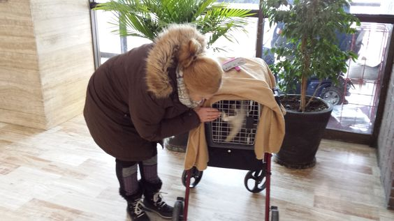 Saturday, January 6, 2018  It's a Happy New Year with new beginnings for Mimi! Bundled up on this wintry morning and ready to go on our bus ride to the Humane Society.  (The carrier is sitting on top of my walker which i need to use because of my accident.)  The bus ride is another story and so is Mimi's vet care, so be sure and read my updates here:  Hungry Feral Cats Need Help https://www.youcaring.com/rosemary-rannes-wall-434871#goto-updates