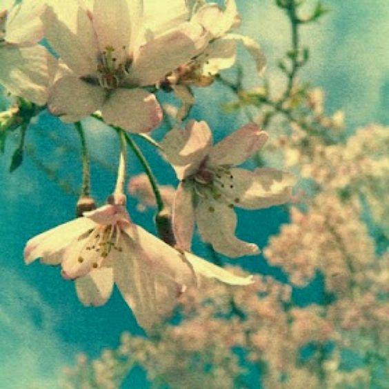 #flower #white #blue #lovely #nature #happines
