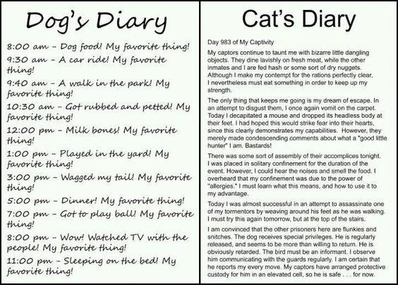 Dog's diary vs. Cat's diary