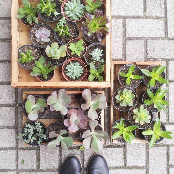 Tô esperando hoje vcs até 16:30 na Brigadeiro Franco, 1193! #plants #succulents #curitibacool #curitiba