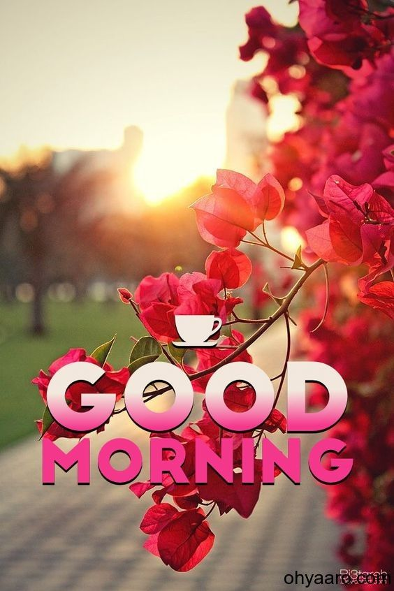 Amazing Good Morning Images Good Morning Flowers Good Morning Animation Good Morning Friends Images