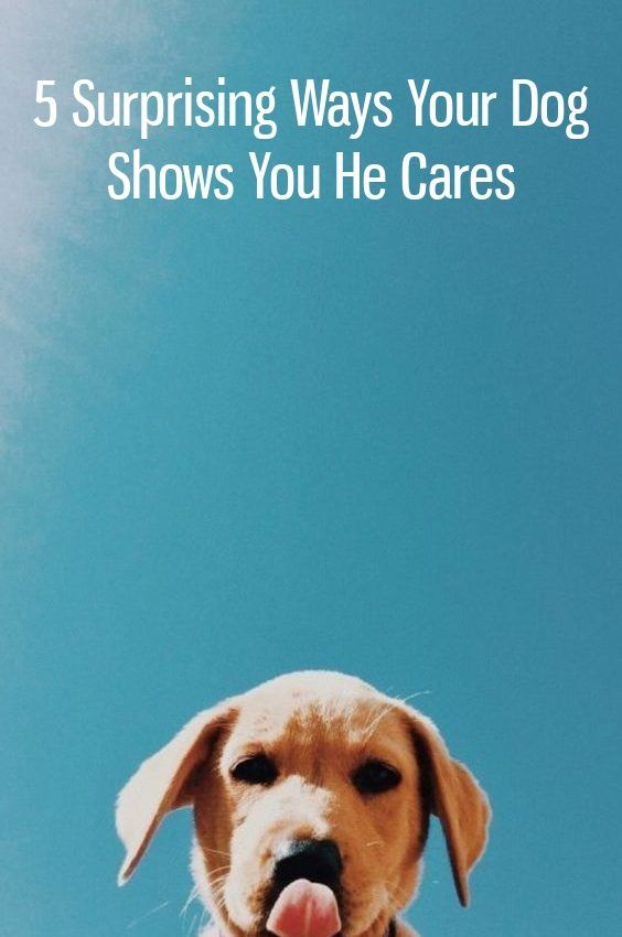 5 Surprising Ways Your Dog Shows You He Cares Dogs