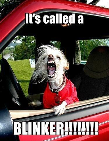 Its called a BLINKER- I've actually debated following some asshole to his final destination to tell him that the automaker forgot to install his blinker!!