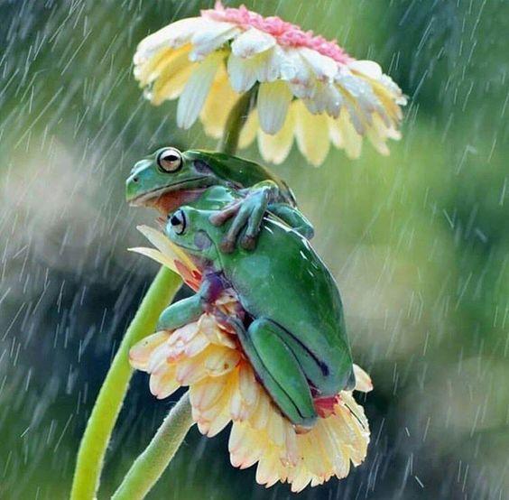 Truelove weathering the storm with this makeshift umbrella   (@sheribarbera)   Twitter