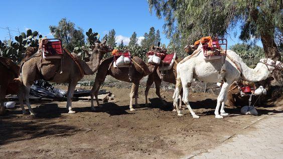 Camelus - Almería