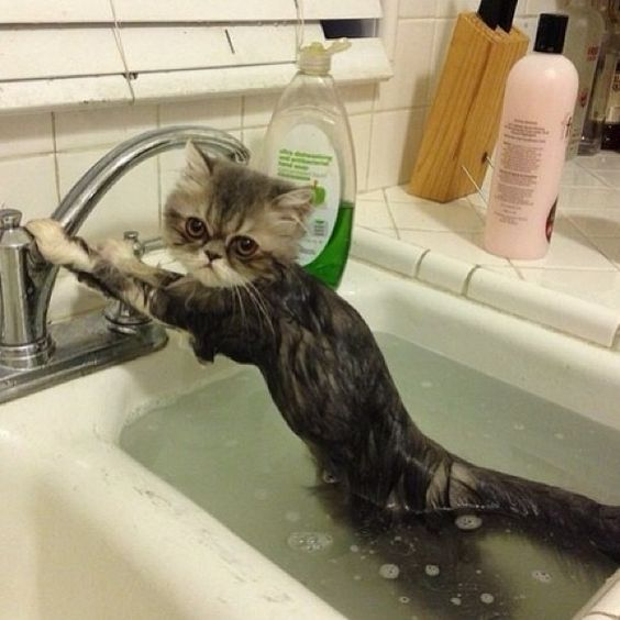 10 #cute Cats Getting Baths: