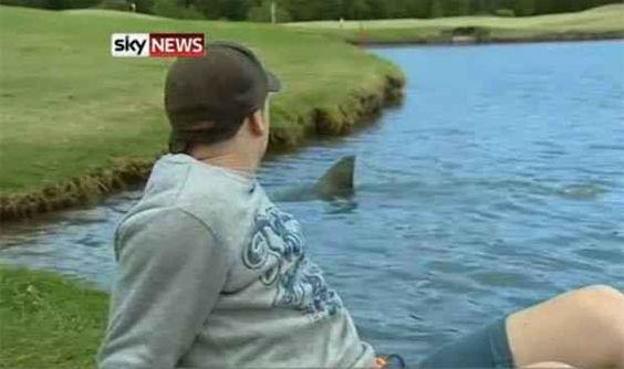 Tubarões comendo jogadores de golfe.