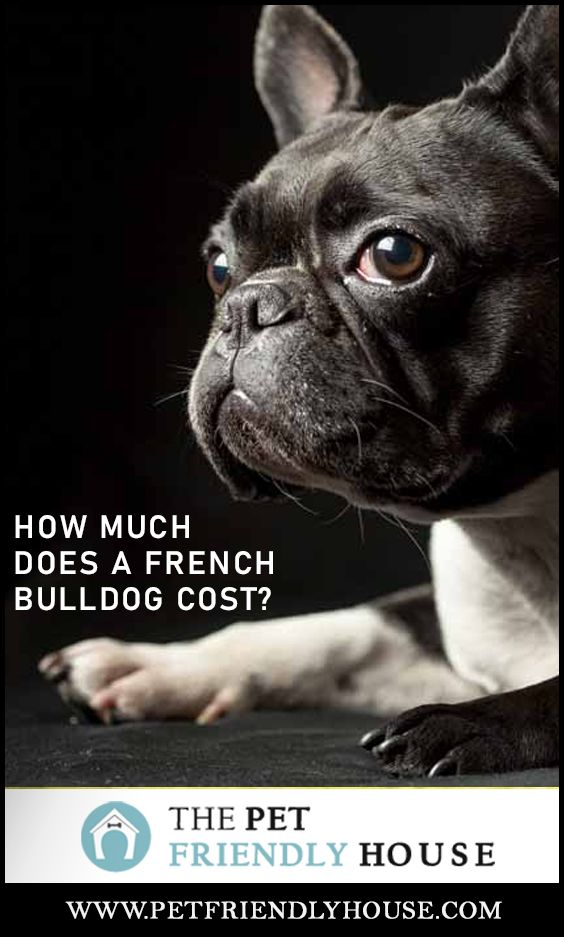 How Much Does A French Bulldog Cost In 2020 French Bulldog Cost French Bulldog Pets