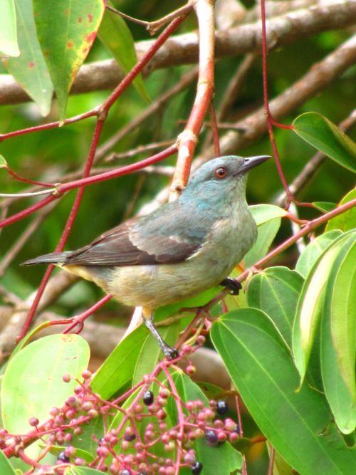 birdalicious