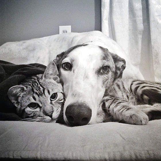 ~ Greyhound Friendship ~: