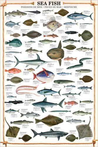 This spectacular wall chart features no less than 66 for Saltwater fish chart