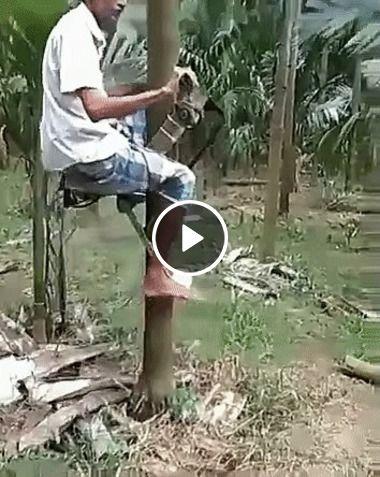 Homem inventa maquina para subir em arvore.