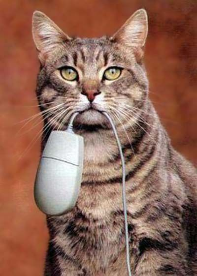 caught a mouse for you...