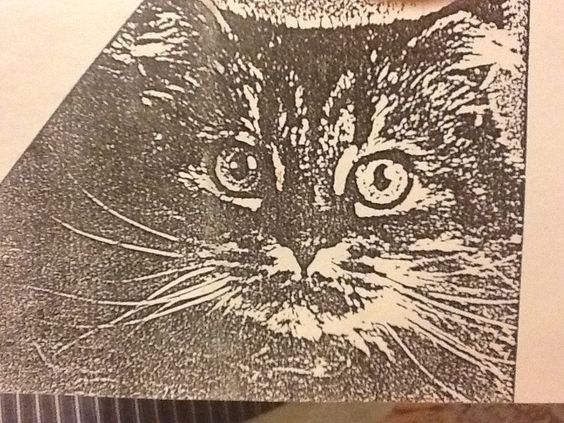 Consentida la gatita