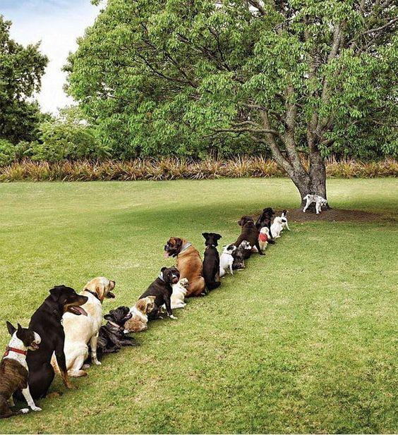 toilet queue #dogs
