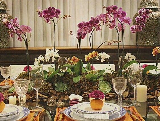 "orquídeas ""plantadas"""