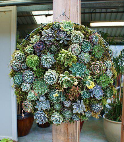 Succulent garden, floral arrangements