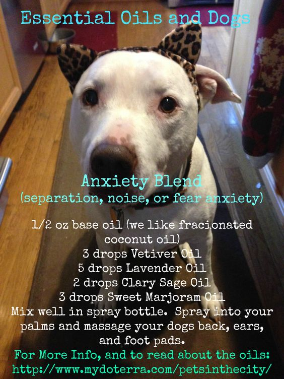 Pet Anxiety Blend.  Pet Anxiety Blend. Need oils? Check out mydoterra.com/petsinthecity/ or send an email to thecitypet@yahoo.com for wholesale options.