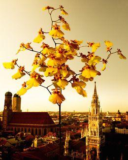 Wir freuen uns über einen 3. Platz beim PR-Bild Award 2012!