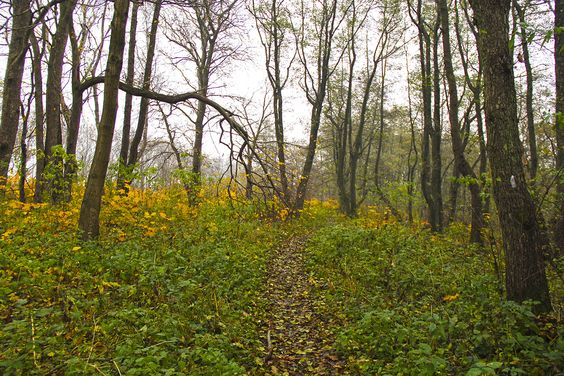 Тропинка в лесу к Камню Лжи. Фото: Evgenia Shveda