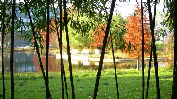 Loki-Schmidt-Garden in Hamburg (S Klein-Flottbek). Botanical garden with many different plants, a garden of stones, lake, glass pyramids and much more. Freely accessible to the public. Info:  http://www.ndr.de/ratgeber/reise/Loki-Schmidt-Garten-Hamburg,botanischergartenhamburg101.html Official: http://www.bghamburg.de/freigelaende