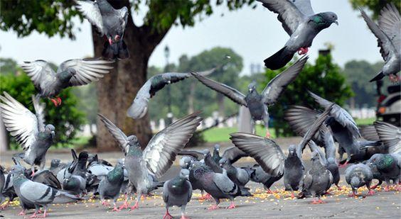Serenity.  Shot at Janpath in Delhi.