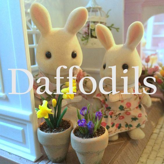 how to: miniature daffodils