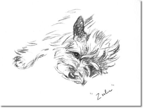 cairn terrier painting - Google-søk