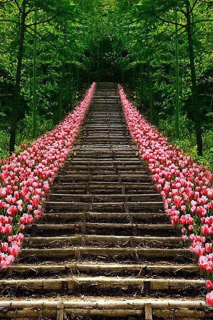 Escada de tulipas, Kyoto, Japão.: